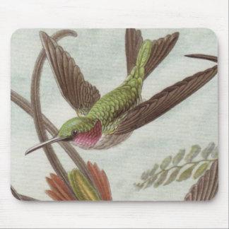 Het Stootkussen van de Muis van de Kolibrie van Muismat