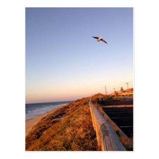 Het Strand Seagul van de valk Briefkaart