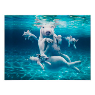 Het strand van het varken - zwemmende varkens - poster