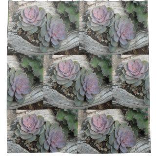 Het Succulente Patroon van Echeveria Gordijn 0