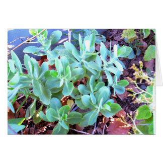 Het succulente Wenskaart van het Plant