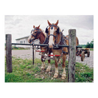 Het Team van Amish bij Post Hitching Briefkaart