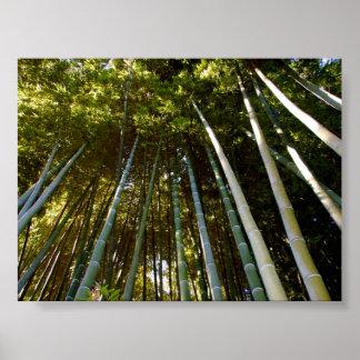 Het torenhoge Poster van het Bamboe