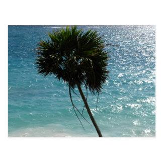 Het tropische Briefkaart van de Palm van het