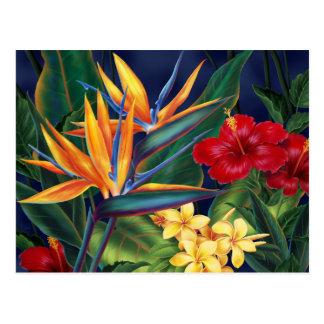 Het tropische Briefkaart van het Paradijs