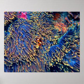 Het tropische Koraal van het Zee Poster
