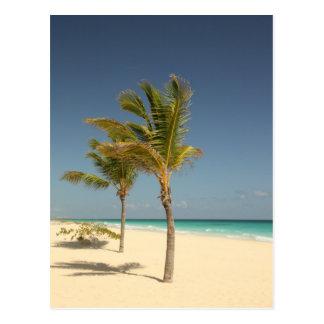 Het Tropische Strand van de Dominicaanse Republiek Briefkaart