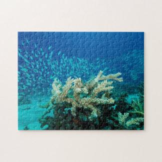 Het tropische Zee van het Koraal van het Puzzel