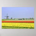 Het typische Nederlands: Windmolen en tulipfields Print