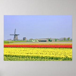 Het typische Nederlands: Windmolen en tulipfields Poster