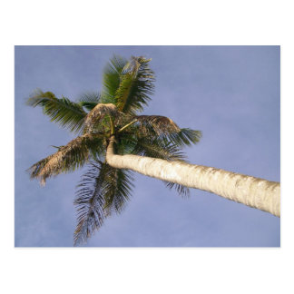 Het Uitzicht van de palm Briefkaart