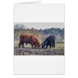 Het vechten de zwarte en bruine stier van de wenskaart