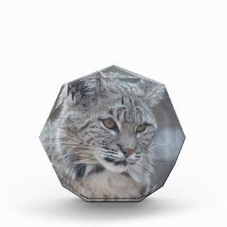 Het verbazen Bobcat Acryl Prijs