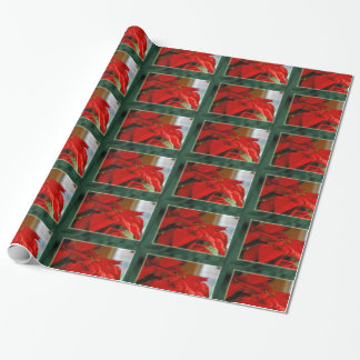 Het Verpakkende Document van de Poinsettia van Cadeaupapier