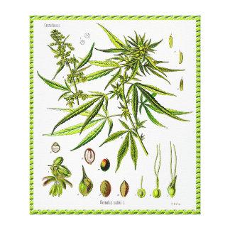 Het Verpakte Canvas van de Plantkunde van het