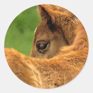 Het verwarde Paard van het Baby Ronde Stickers