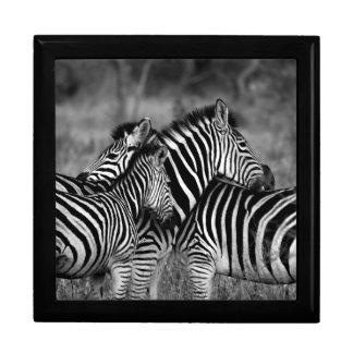 Het verzorgen zebra decoratiedoosje