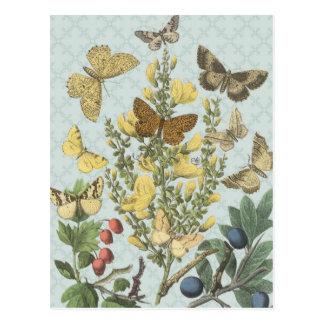 Het vintage Botanische briefkaart van Vlinders…