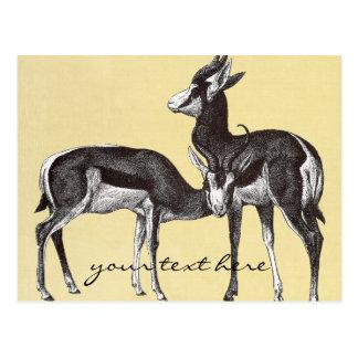 Het vintage Briefkaart van de Springbok