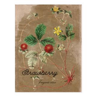 Het vintage Briefkaart van de Wilde Aardbei van de