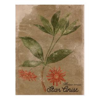 Het vintage Briefkaart van het Kruid van Anis van
