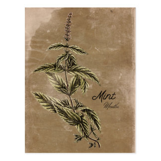 Het vintage Briefkaart van het Kruid van de Munt