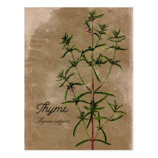Het vintage Briefkaart van het Kruid van de Thyme
