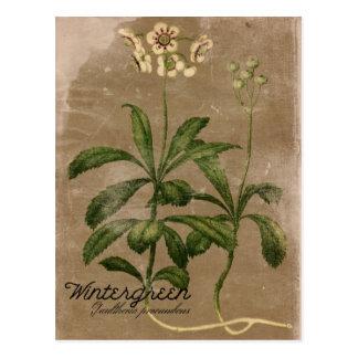 Het vintage Briefkaart van het Plant van