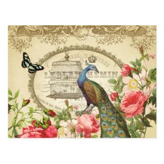Het vintage Franse briefkaart van de Pauw
