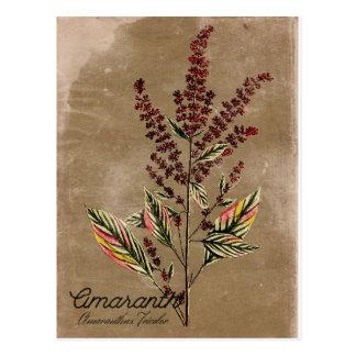 Het vintage Plant van de Amarant van de Stijl Briefkaart