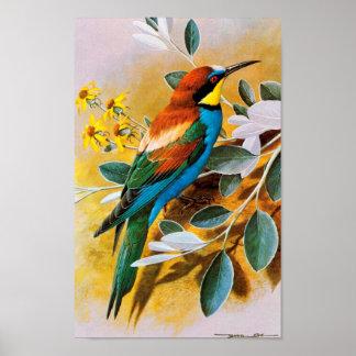 Het vintage Poster van de Vogel