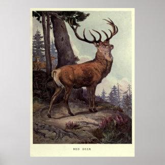 Het vintage Rode Schilderen van Herten (1909) Poster