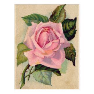 Het vintage Roze nam Briefkaart toe