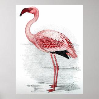 Het vintage Roze Schilderen van de Flamingo Poster