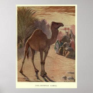 Het vintage Schilderen van de Kameel (1909) Poster