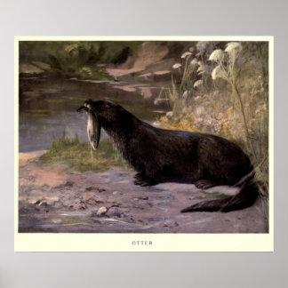 Het vintage Schilderen van de Otter (1909) Poster