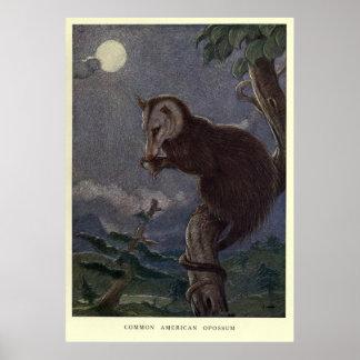 Het vintage Schilderen van het Opossum (1909) Poster