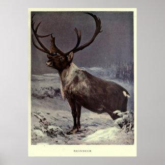 Het vintage Schilderen van het Rendier (1909) Poster