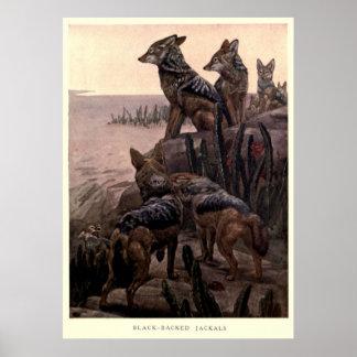 Het vintage Schilderen van Jakhalzen (1909) Poster