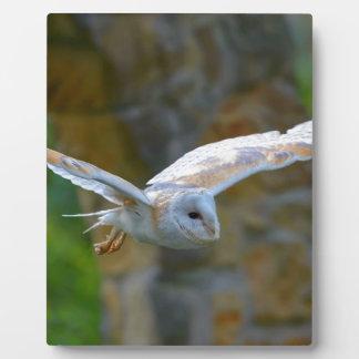 Het Vliegen van de Uil van de schuur Fotoplaat