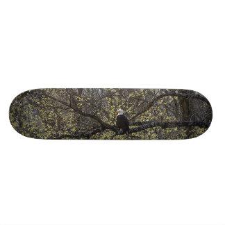 Het Vooruitzicht Painterly van Eagle Skateboards