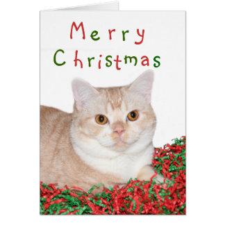 Het vrolijke kat van Kerstmis Briefkaarten 0