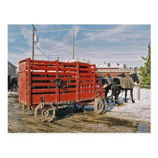 Het wagen-Briefkaart van het Vee van Amish Briefkaart