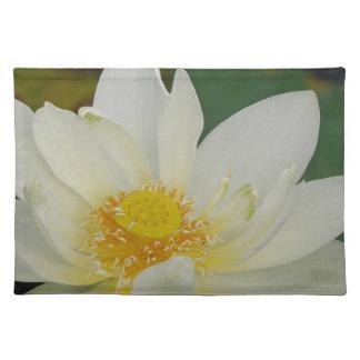 Het Water Lily02.JPG van de room Placemat