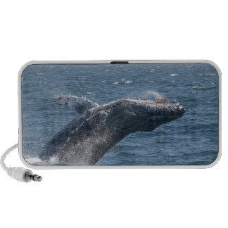 Het wegknippen van de Walvis iPhone Speakers