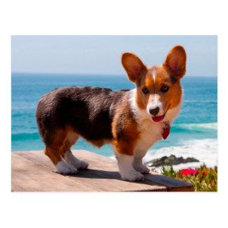 Het Welse puppy Corgi die van Pembroke zich op Briefkaart