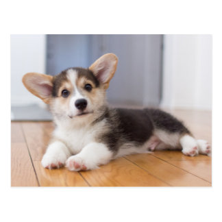 Het Welse Puppy Corgi van Pembroke Briefkaart