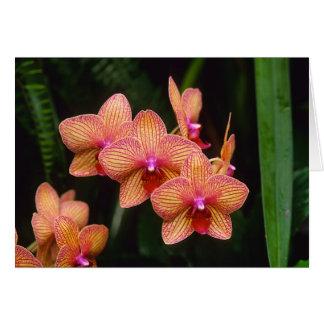 Het Wenskaart van de orchidee