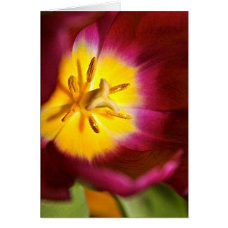 Het Wenskaart van de tulp
