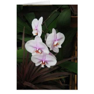 Het Wenskaart van orchideeën